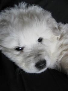 Puppies-078